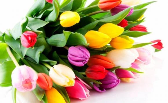 Прийміть найщиріші вітання зі святом весни, любові та краси – Міжнародним жіночим днем! Щороку це свято приходить до нас добрим вісником весни, символом любові і злагоди, пробуджуючи в людських серцях світлі надії.
